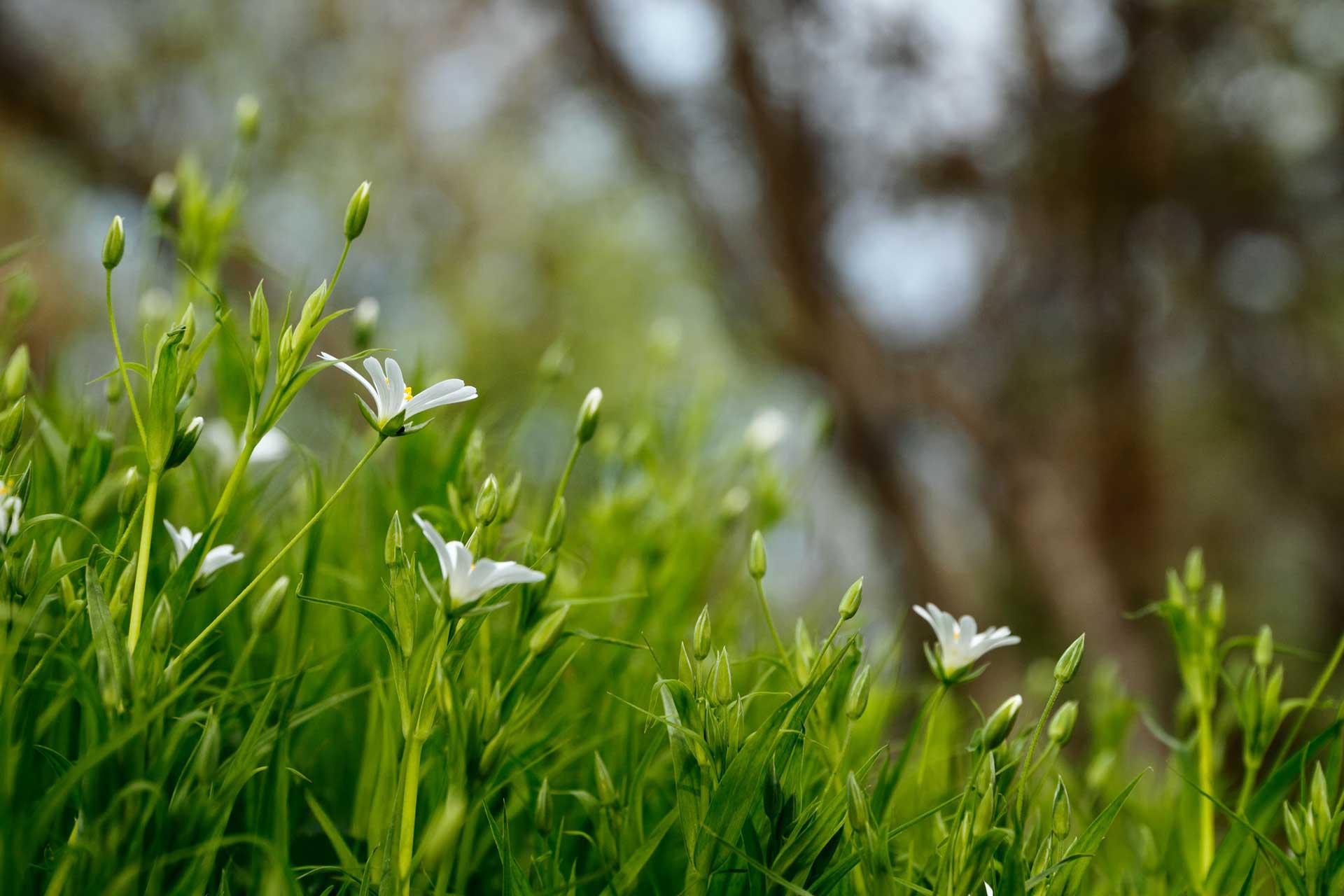 become-a-mind-gardener